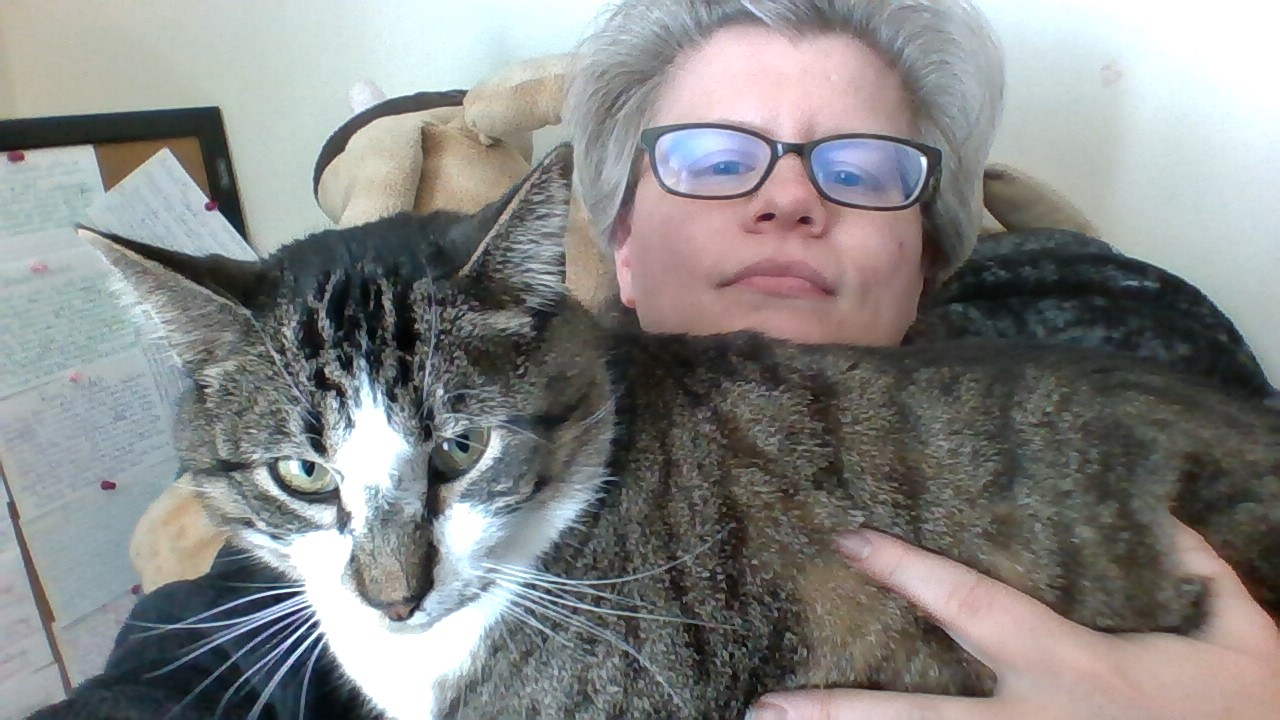 A large, handsome, brown and white tabby tom cat with green eyes is sitting on my chest and blocking access to my laptop.
