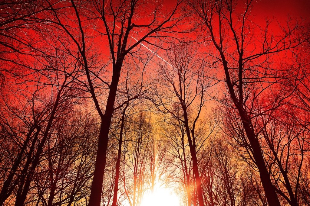 black trunks of leaf-bare trees set against a lurid sunset with red-tinted clouds.